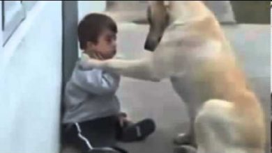 صورة فيديو ابكى العالم كله.لطفل من ذوي الاحتياجات الخاصة..صامت بألف كلمه