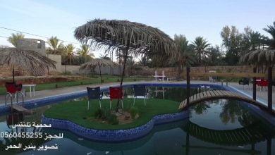 صورة مواطن يحول منزله في بريدة إلى محمية طبيعية لألآف الطيور + فيديوهات