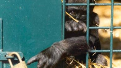 صورة صورة .. تقول ألآف الكلمات.وحتى لا تئول .هي لمن يستمتعون بحبس الحيوانات.